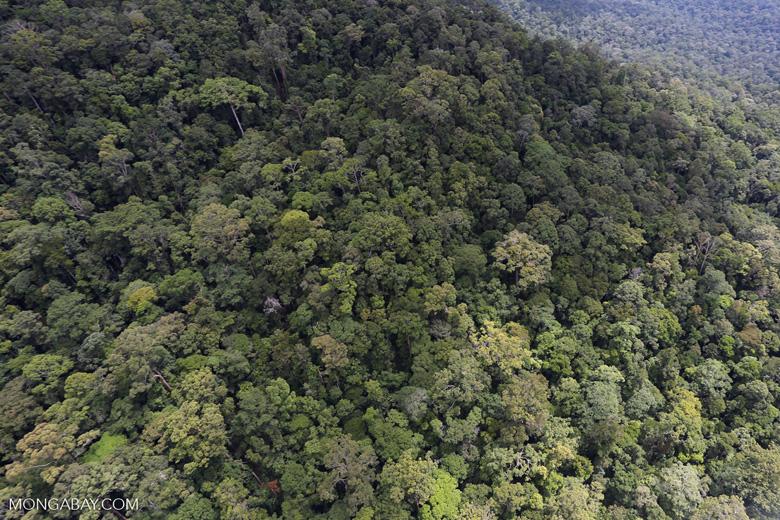Borneo rainforest -- sabah_aerial_1058