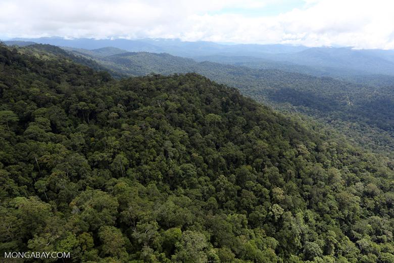 Borneo rainforest -- sabah_aerial_1067