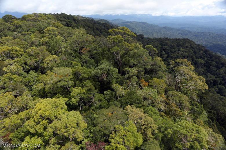 Borneo rainforest -- sabah_aerial_1071