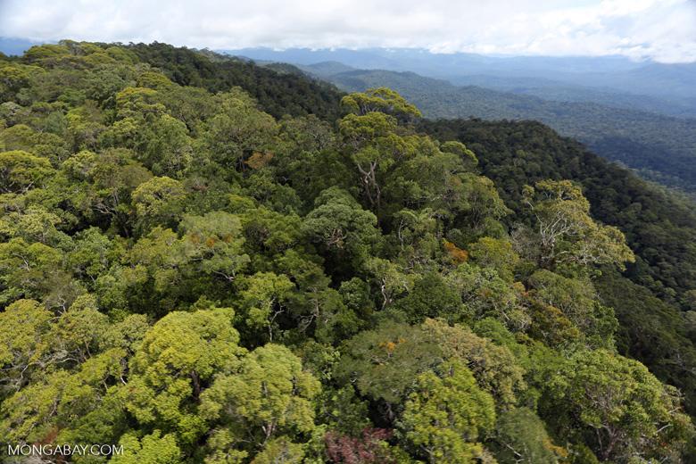 Borneo rainforest -- sabah_aerial_1072