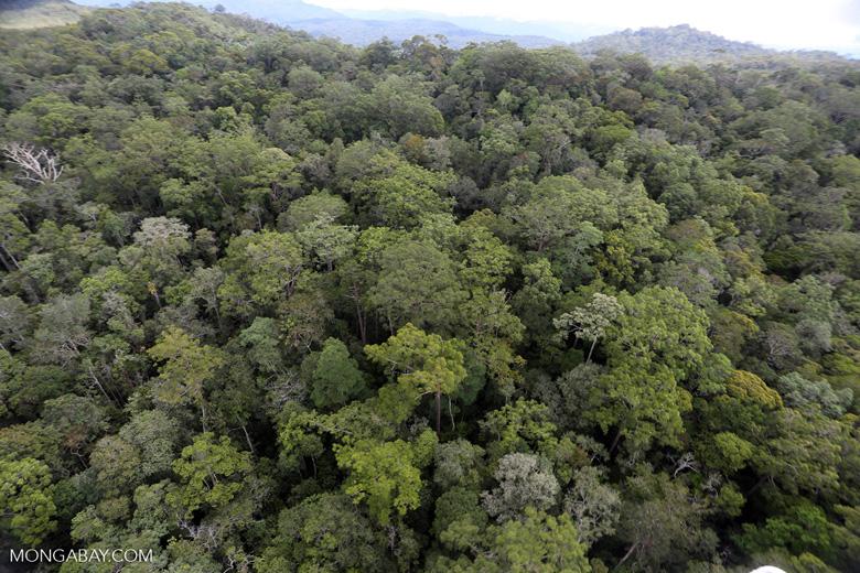 Borneo rainforest -- sabah_aerial_1074