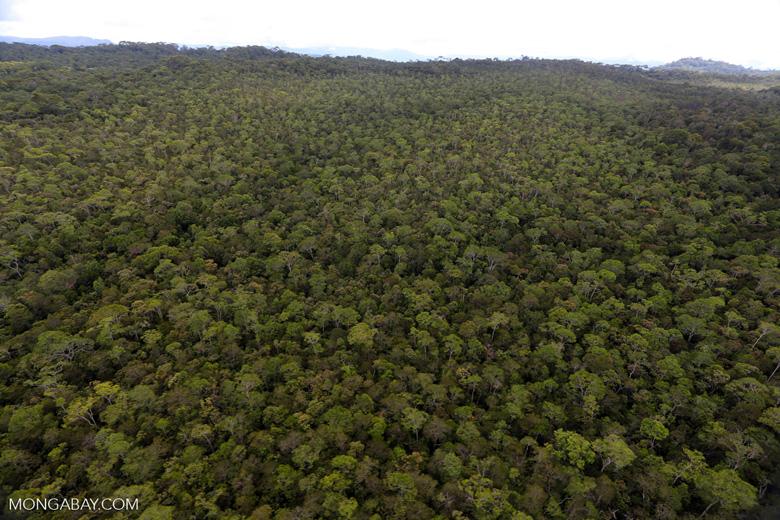 Borneo rainforest -- sabah_aerial_1095