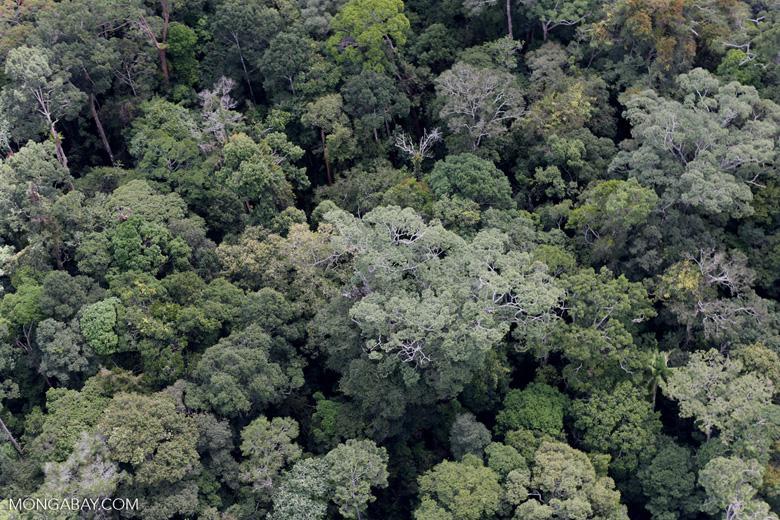 Borneo rainforest -- sabah_aerial_1112