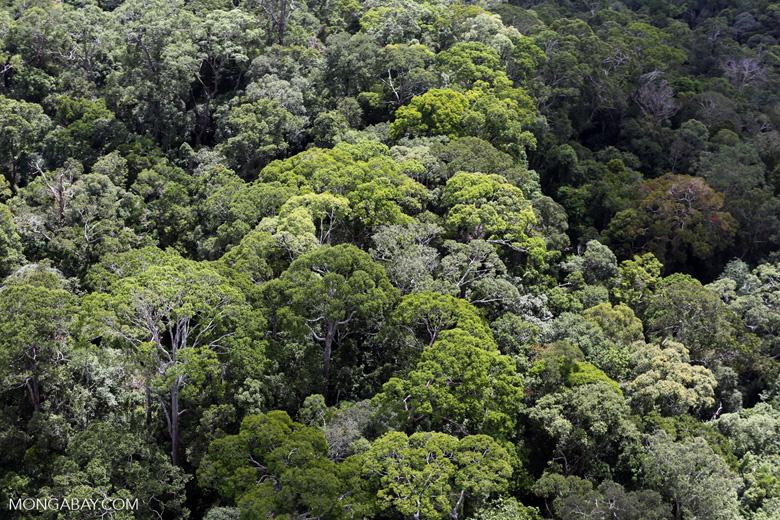 Borneo rainforest -- sabah_aerial_1114