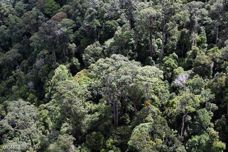 Borneo rainforest -- sabah_aerial_1116