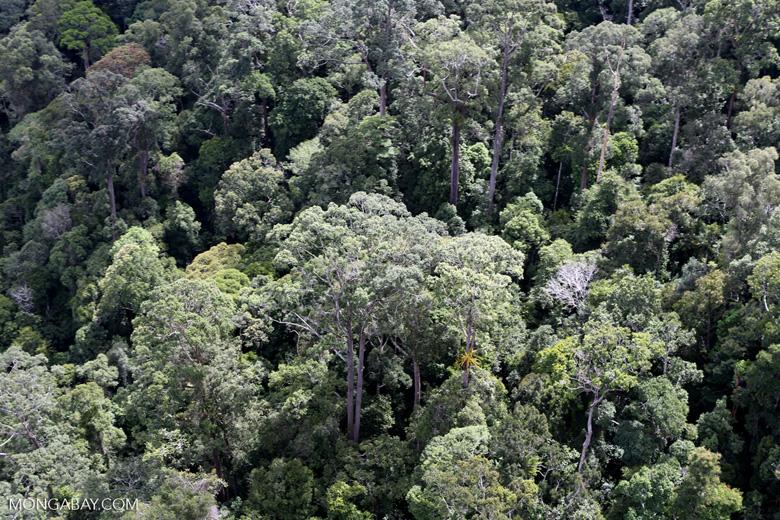Borneo rainforest -- sabah_aerial_1117
