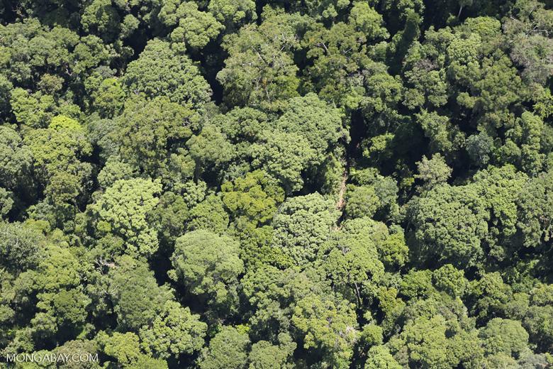 Borneo rainforest -- sabah_aerial_1129