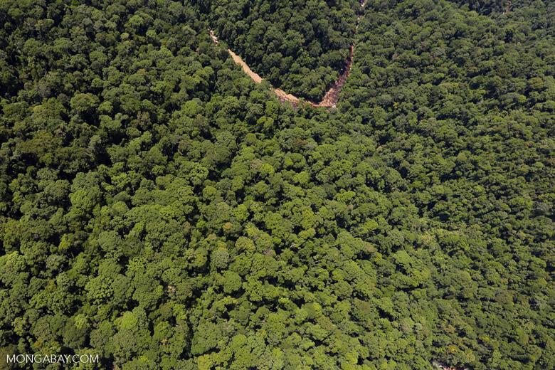 Borneo rainforest river -- sabah_aerial_1160