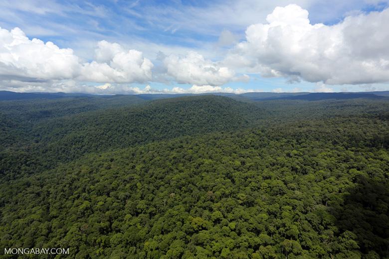 Borneo rainforest -- sabah_aerial_1173