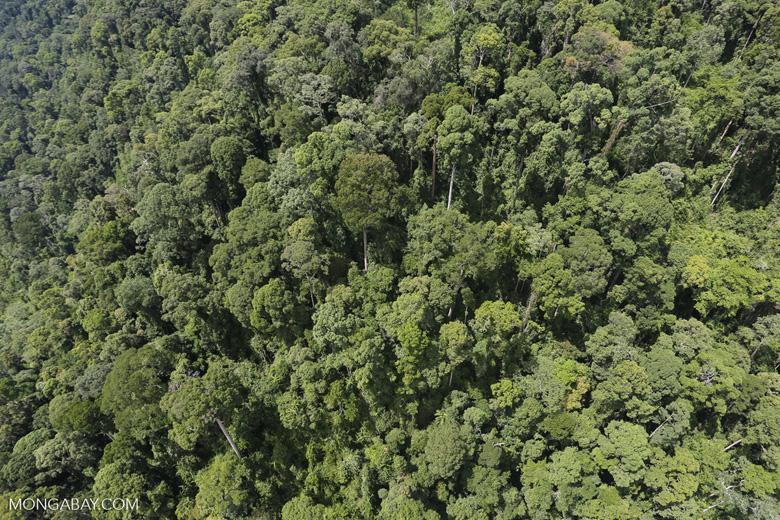 Borneo rainforest -- sabah_aerial_1185