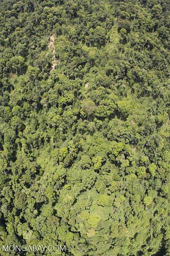 Borneo rainforest -- sabah_aerial_1200