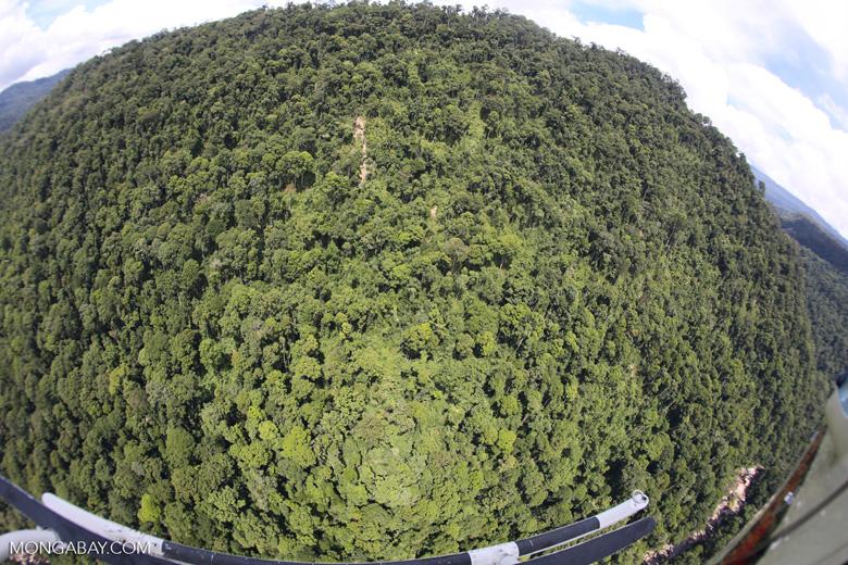 Borneo rainforest -- sabah_aerial_1206