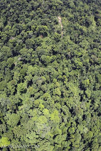 Borneo rainforest -- sabah_aerial_1210