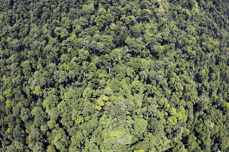 Borneo rainforest -- sabah_aerial_1214