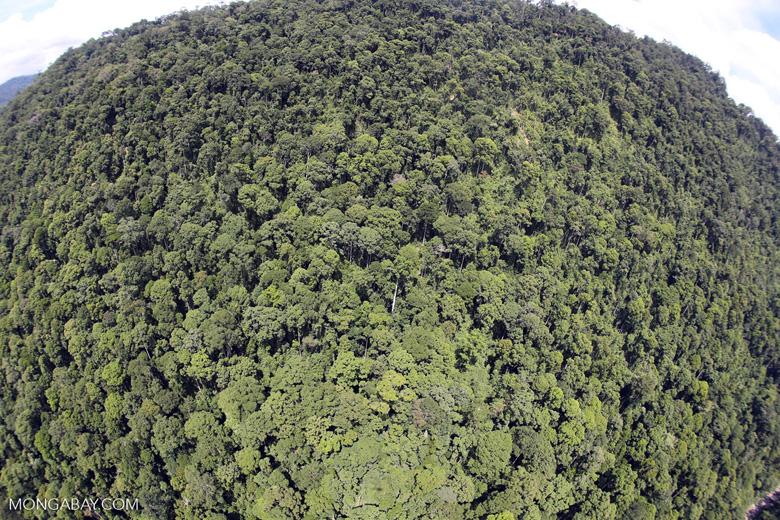 Borneo rainforest -- sabah_aerial_1216