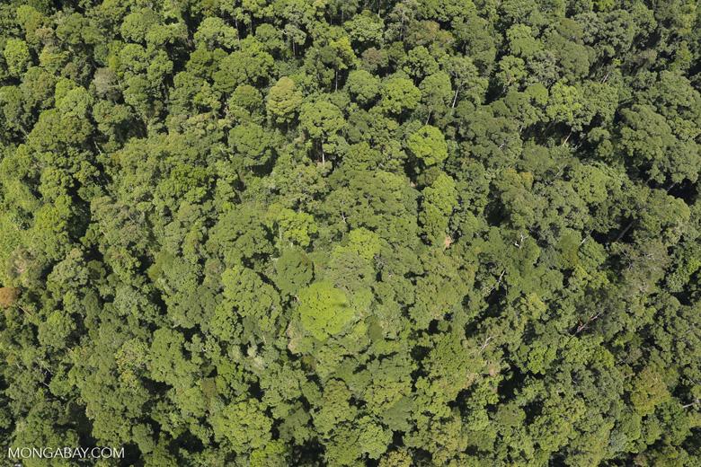 Borneo rainforest -- sabah_aerial_1219