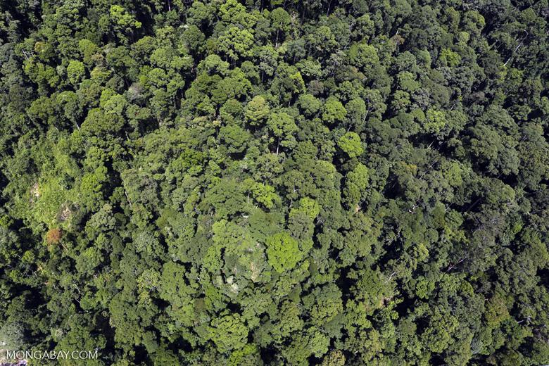 Borneo rainforest -- sabah_aerial_1222