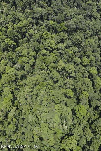 Borneo rainforest -- sabah_aerial_1225