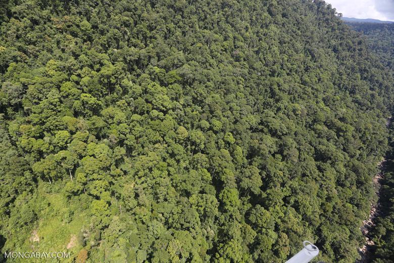 Borneo rainforest -- sabah_aerial_1227
