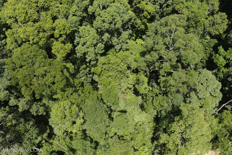 Helicopter shadow over the rainforest -- sabah_aerial_1242