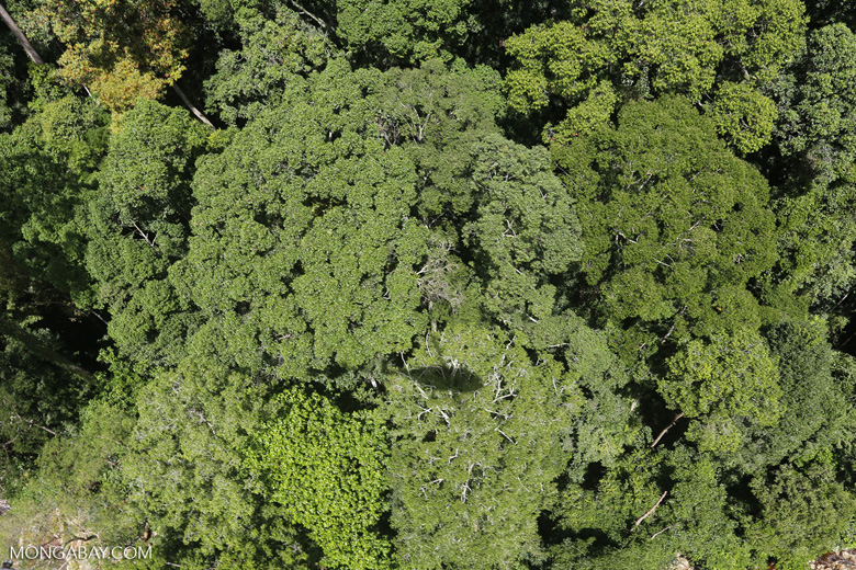 Helicopter shadow over the rainforest -- sabah_aerial_1244