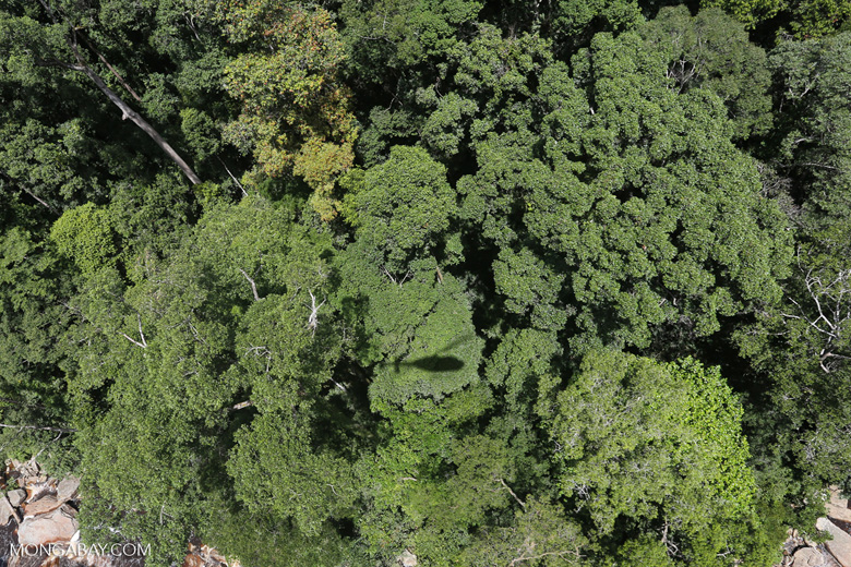 Helicopter shadow over the rainforest
