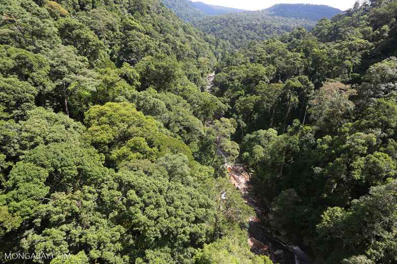 Borneo rainforest -- sabah_aerial_1248