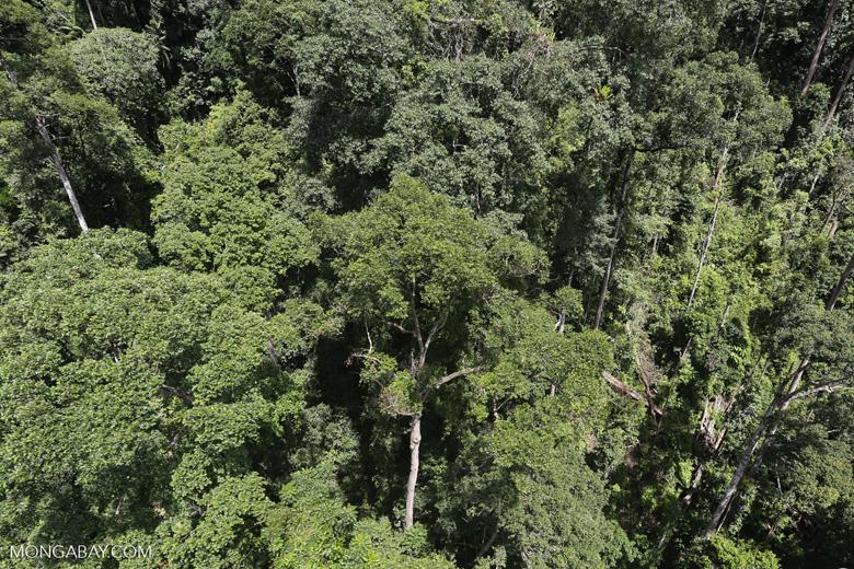 Borneo rainforest -- sabah_aerial_1254