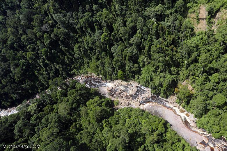 Rainforest river in Borneo