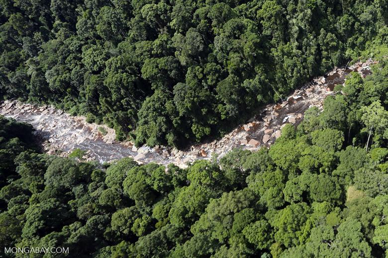 Rainforest river in Borneo -- sabah_aerial_1450