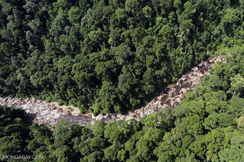 Rainforest river in Borneo -- sabah_aerial_1452