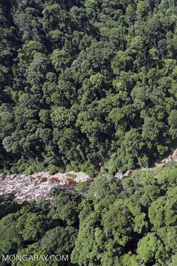 Rainforest river in Borneo -- sabah_aerial_1455