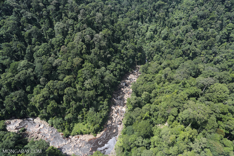 Rainforest river in Borneo -- sabah_aerial_1459