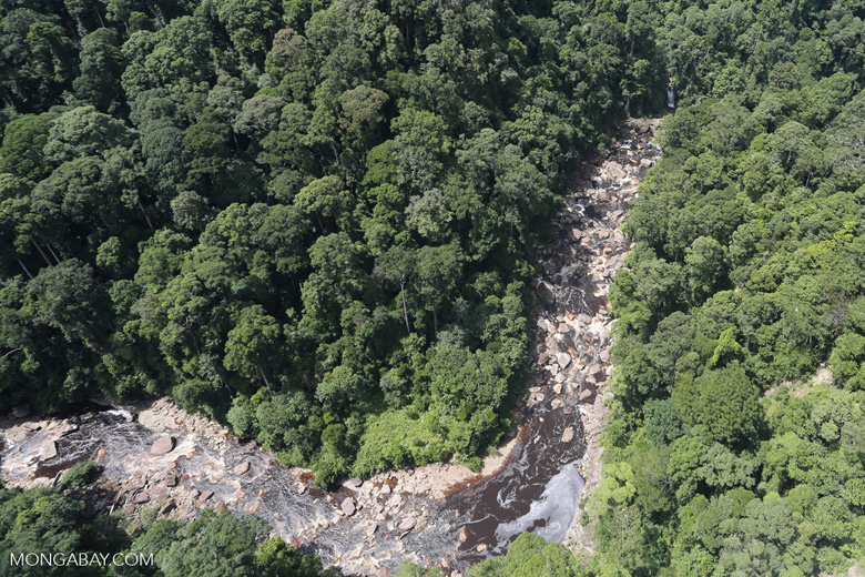 Rainforest river in Borneo -- sabah_aerial_1460