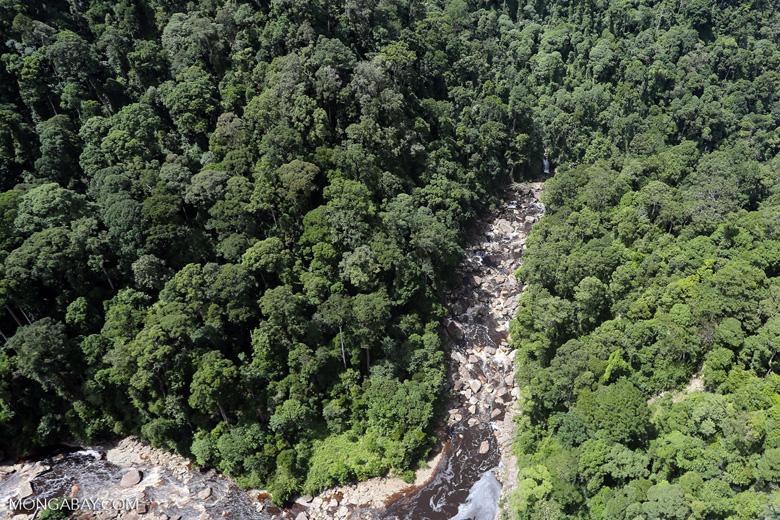 Rainforest river in Borneo -- sabah_aerial_1461