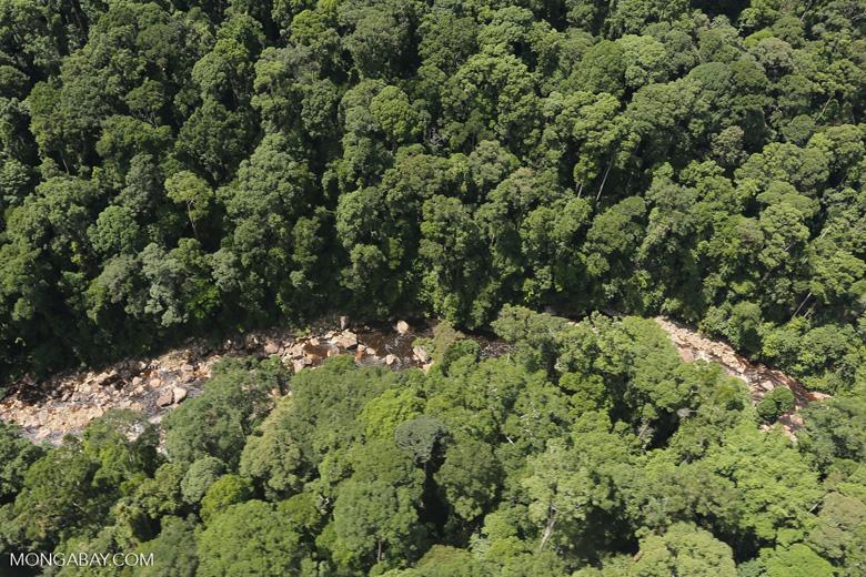Rainforest river in Borneo -- sabah_aerial_1465