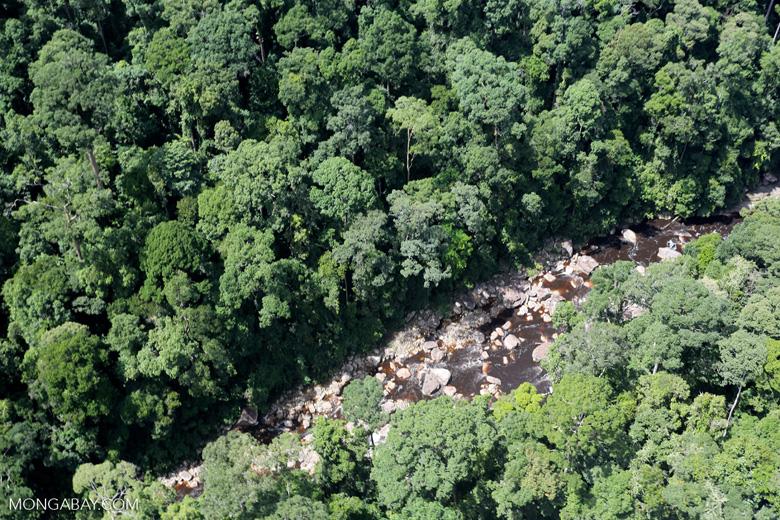 Rainforest river in Borneo -- sabah_aerial_1469