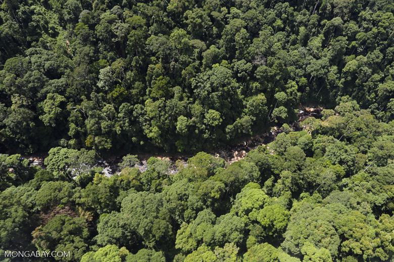 Rainforest river in Borneo -- sabah_aerial_1478