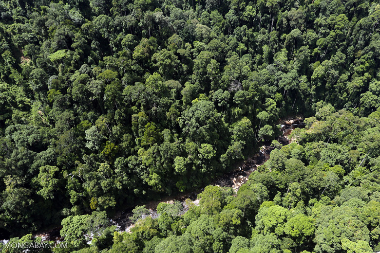 Rainforest river in Borneo -- sabah_aerial_1479