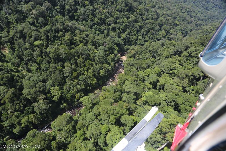 Rainforest river in Borneo -- sabah_aerial_1482