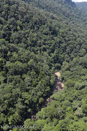 Rainforest river in Borneo -- sabah_aerial_1484