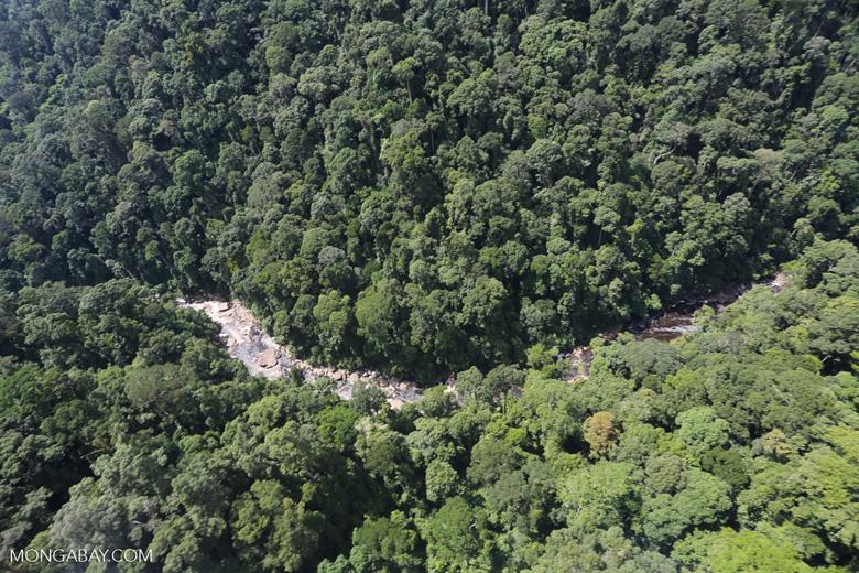Rainforest river in Borneo -- sabah_aerial_1486