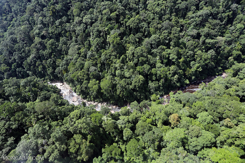 Rainforest river in Borneo -- sabah_aerial_1487