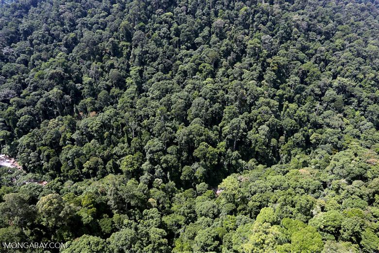 Rainforest river in Borneo -- sabah_aerial_1490