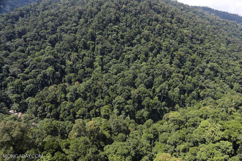 Rainforest river in Borneo -- sabah_aerial_1493