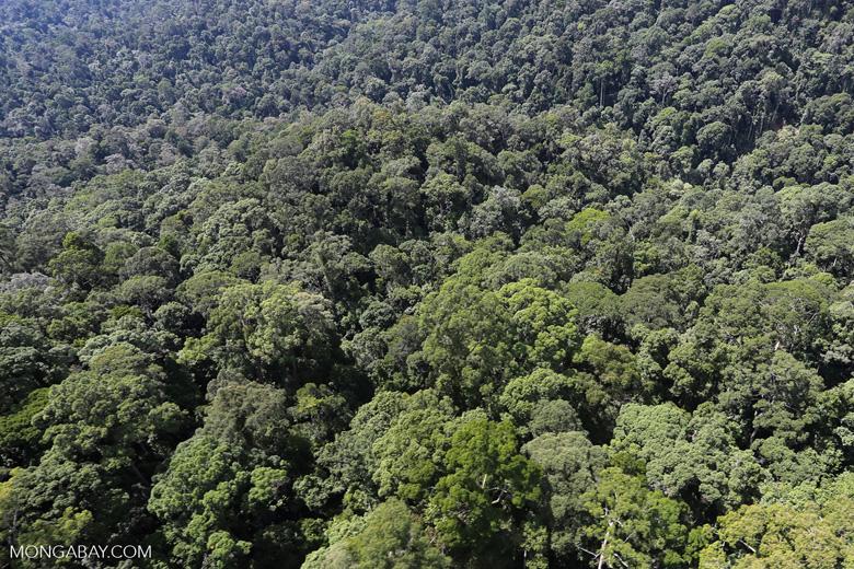 Borneo rainforest -- sabah_aerial_1495