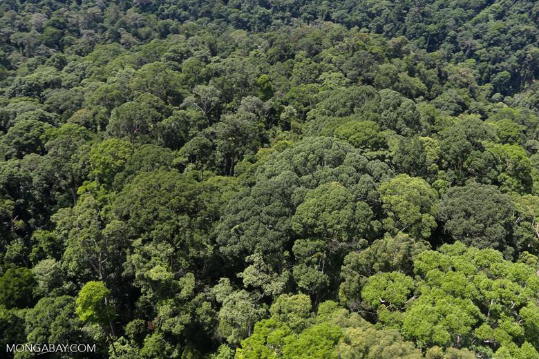 Borneo rainforest -- sabah_aerial_1502