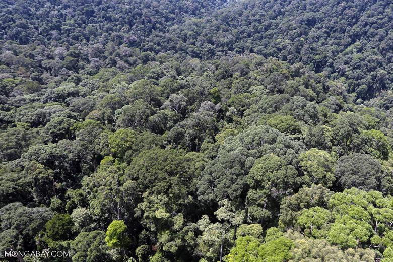 Borneo rainforest -- sabah_aerial_1503