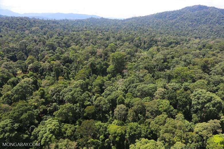 Borneo rainforest -- sabah_aerial_1504