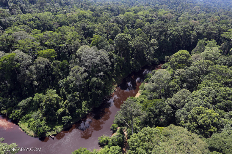 Blackwater river in Borneo